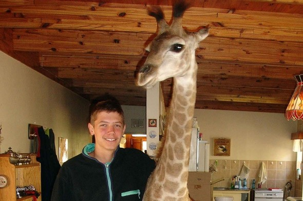A family PET that's head and shoulders above the rest...it's Fenne the GIRAFFE