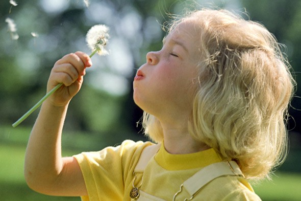 Girl blowing dandelion clock