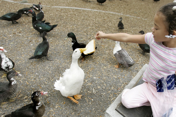 Feeding the ducks? That'll be a 2,500 fine