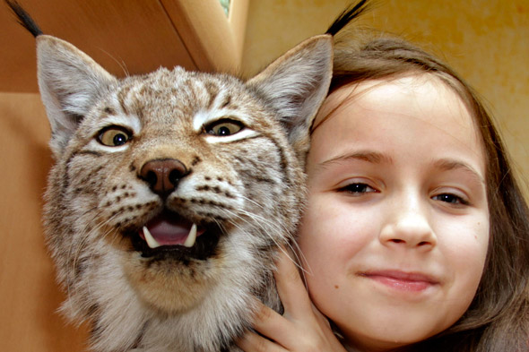 The purr-fect family pet? Sofia, 11, shares her home with her pet Lynx wild cat!