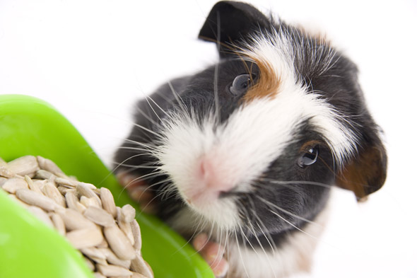 Kids see drunk dad kill pet guinea pig by throwing it against a wall