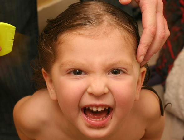 Nit combing: Lousy summer causes headlice epidemic amongst children AND adults