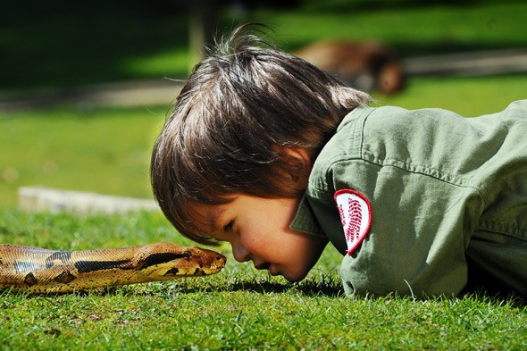 The two-year-old snake charmer: Charlie Parker sees eye to eye with Pablo the boa constrictor