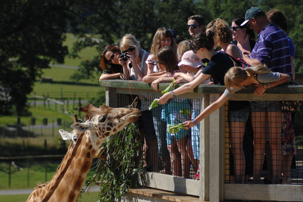 Go wild at Longleat safari