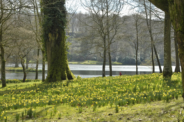 National Trust encourages kids to climb trees at Stourhead gardens