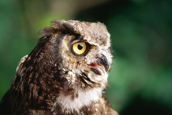 Thugs armed with silly string try to steal boy's pet OWL!