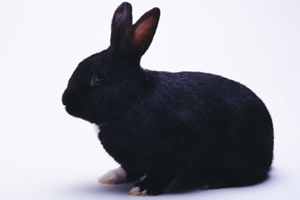 Mum kicked pet rabbit around the garden to get her teen daughter's attention, court hears