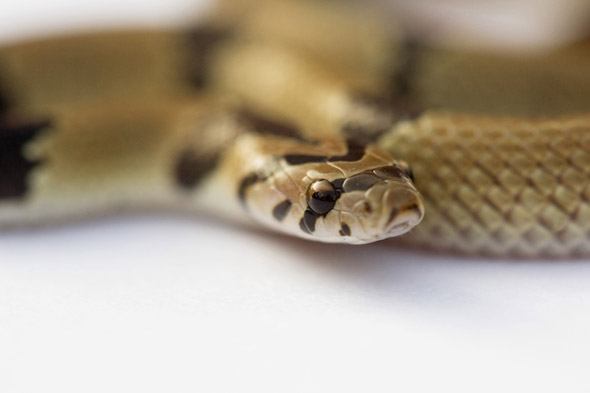 Mum finds seven deadly snakes at bottom of 3-year-old son's wardrobe
