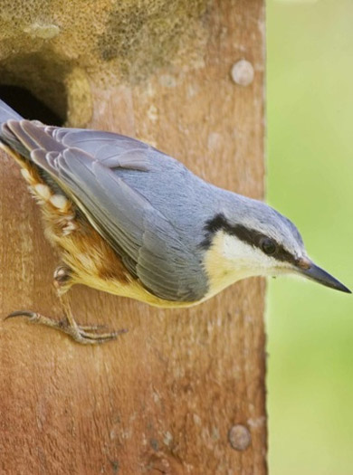 National Nest Box Week