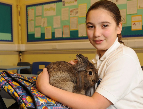 Rabbit stows away in 11-year-old girl's school bag and turns up in classroom!