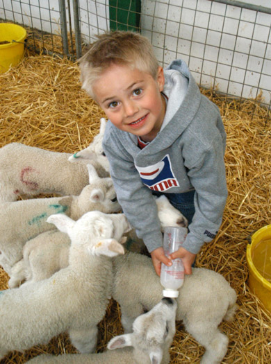 Half-price Off Easter Trips To The Big Sheep With Blue Chip Holidays