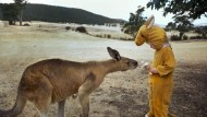 Nice to meet Roo! Kangaroo fooled by kid's onesie