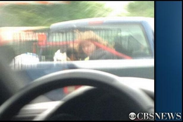 Parents arrested after girl, 10, is spotted in dog cage on back of truck