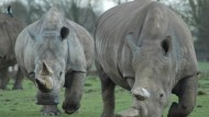 Whipsnade Zoo - a great family day out