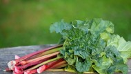 Easy and delicious rhubarb recipes