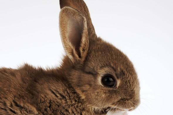 Thieves steal young family's pet rabbit