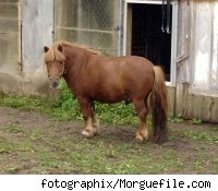 A miniature pony outside a farm building