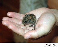 A tiny mouse sitting in a person's hand.