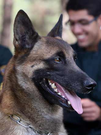 drug sniffing dogs
