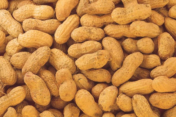 peanut food allergy picture