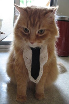 Feline with the Cat Tie picture