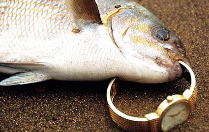 Fish coughs up a gold watch
