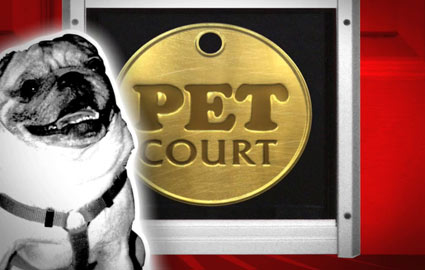 Pet court picture