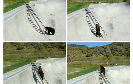 Bear at Colarado Skate Park picture