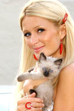 Paris Hilton adopts himalayan mix kitten picture