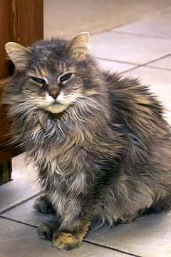 Caterack the 30 year old feral cat picture