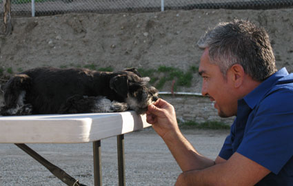 Cesar Milan with a schnauzer puppy picture