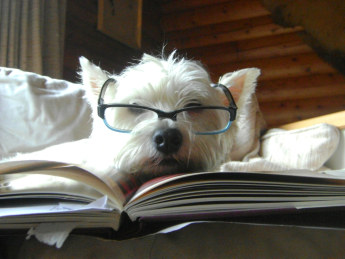 Funny dog wearing specs picture