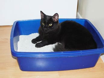 Cat in the box picture