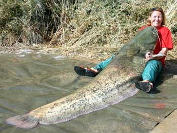 Giant Catfish captured picture