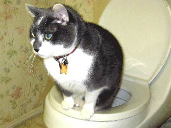 how to toilet train adult cat