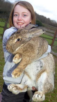 Ralph the giant rabbit picture