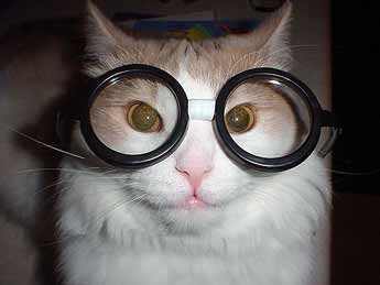 Cat with swimming goggles picture