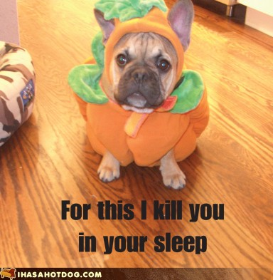 pissed off pets who get dressed up