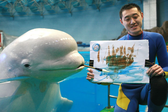 beluga whale paint picture