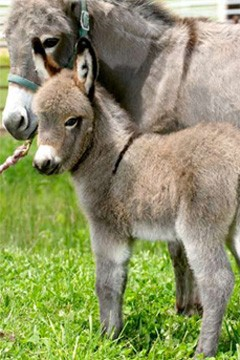 donkeys picture