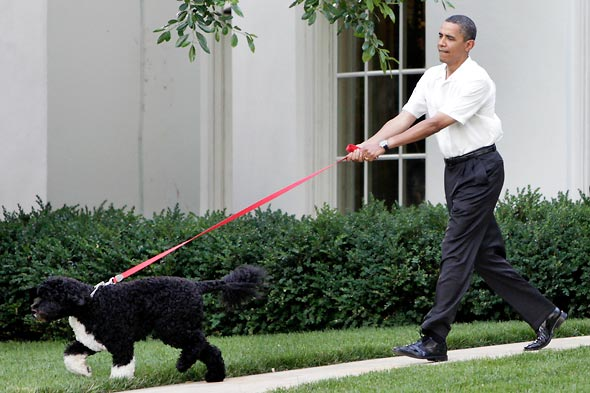 First dog straining at leash held by Obama