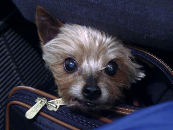 Pets during travel picture
