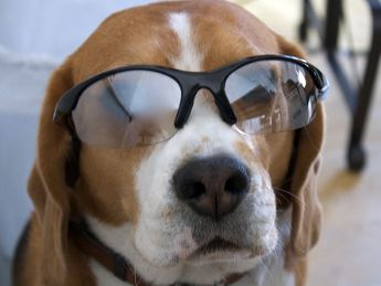 Dog wearing spectacles