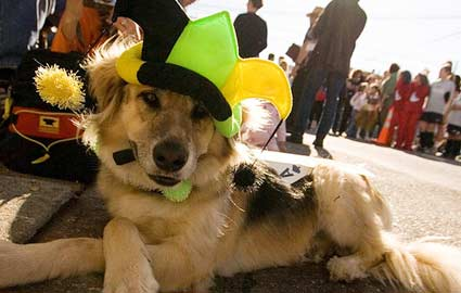 dog halloween costumes by horoscope sign