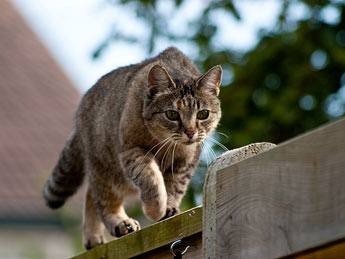 cat fence outside
