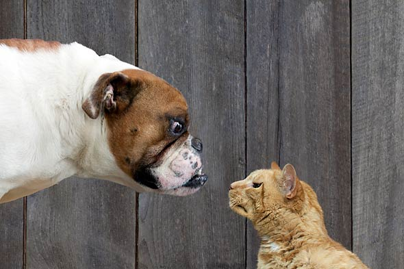 dog cat faceoff picture