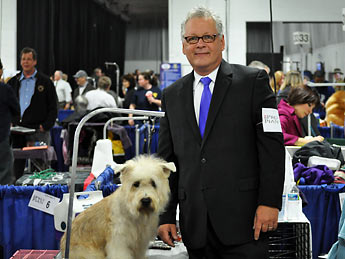 curry glenn of imaal terrier national dog show picture