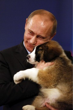 http://www.blogcdn.com/www.pawnation.com/media/2010/11/its-a-vladimir-putin-puppy-party.jpg