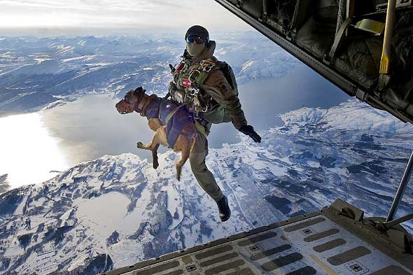 Should Canine Paratroopers be Helping Battle the Taliban in Afghanistan?