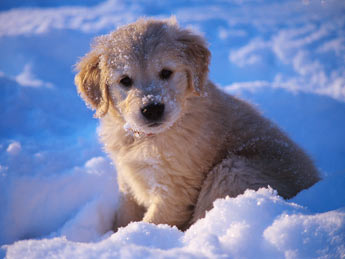 puppy snow photo